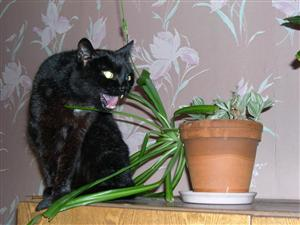 коты и цветы C6540580-6978-4c37-b226-d1fa48482389?mw=300&mh=300